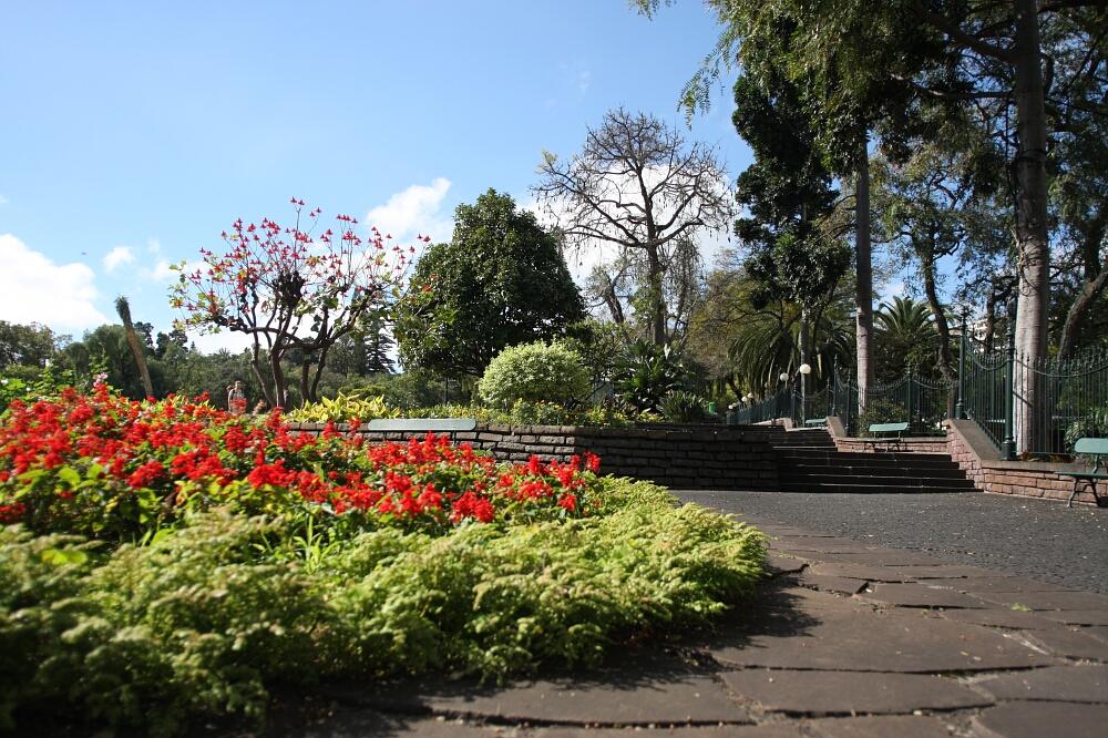 Madeira flowers 00
