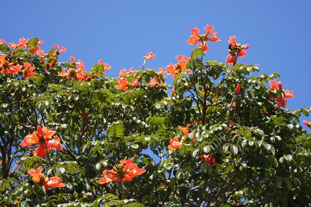 Madeira flowers 01