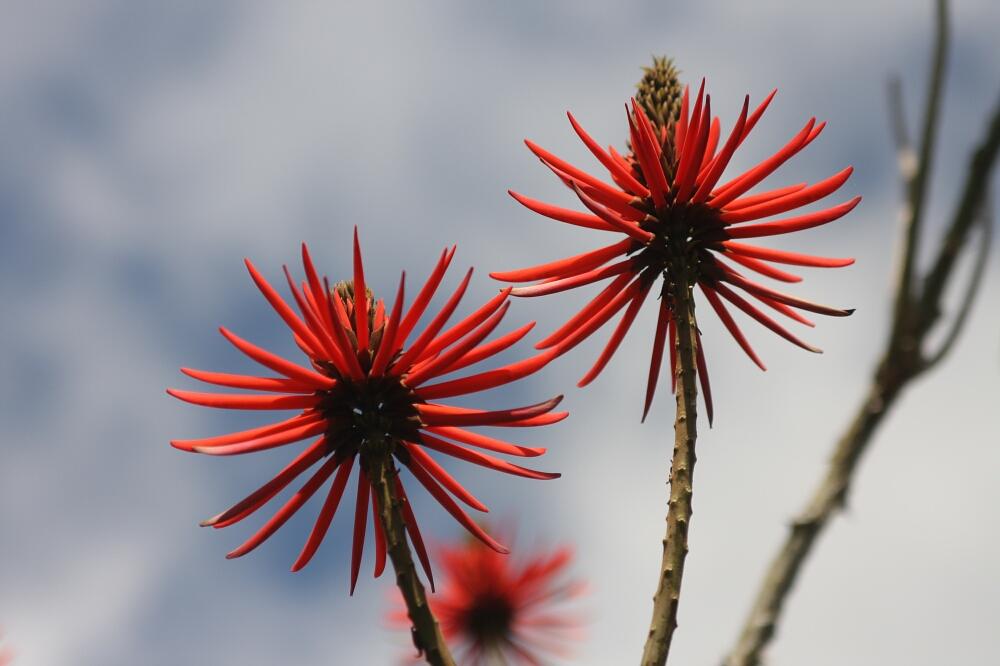 Madeira flowers 02