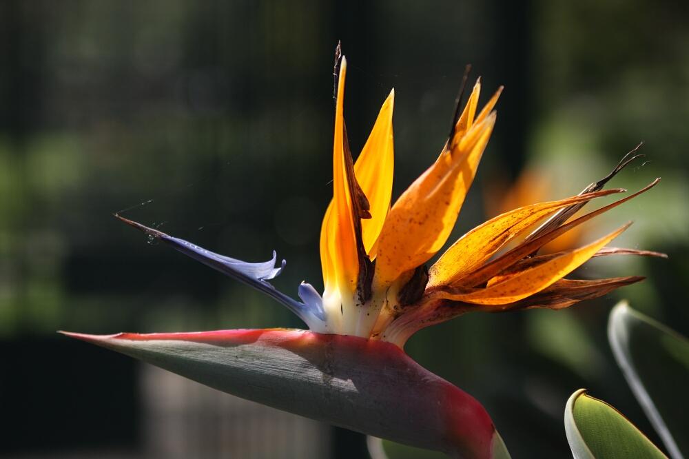 Madeira flowers 03