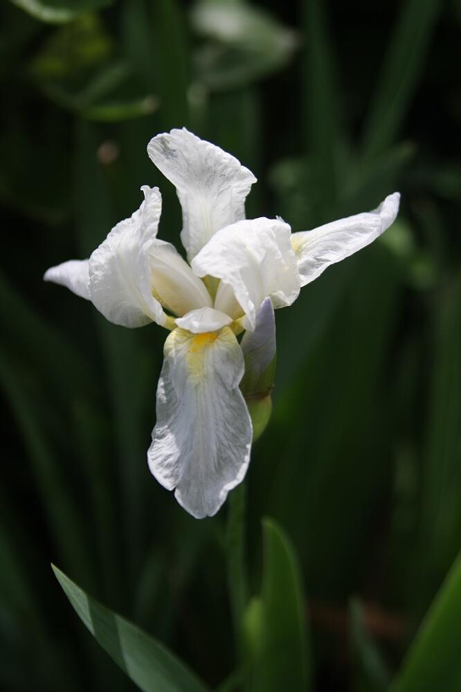 Madeira flowers 04