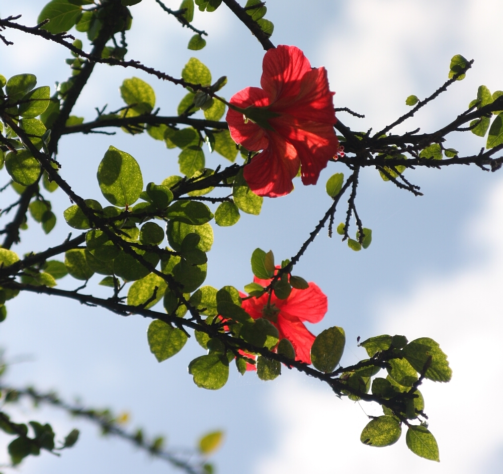 Madeira flowers 05