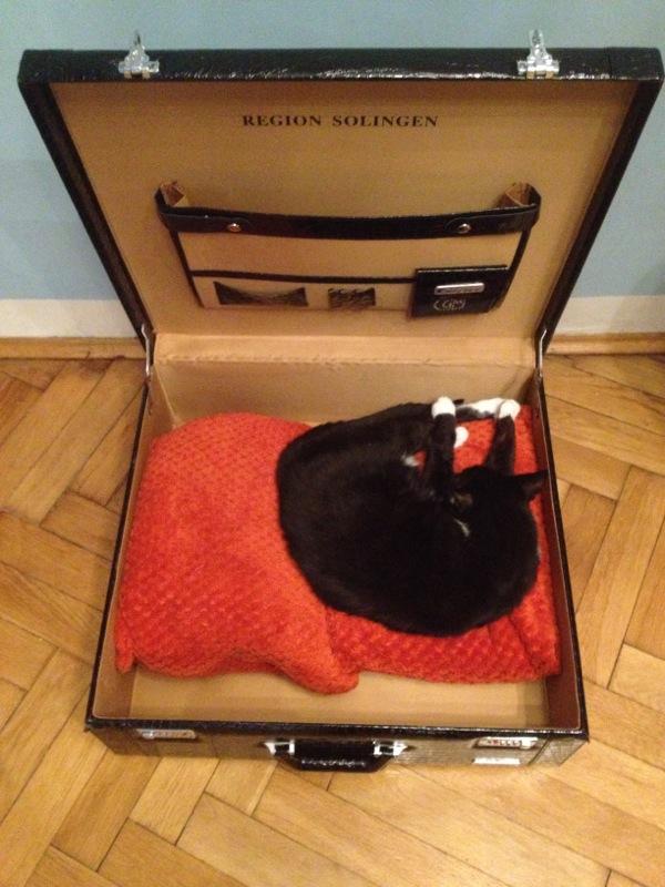 Kot w walizce / na walizkach - Co spakować do Indii?