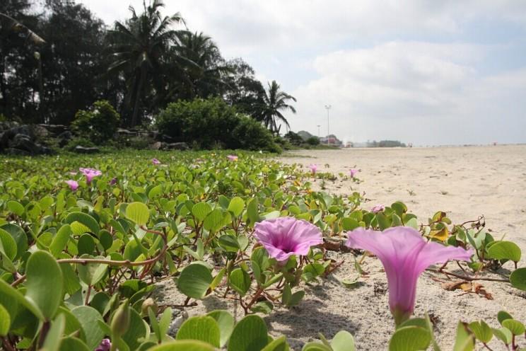 Ciekawe miejsca wIndiach południowych: Alleppey Beach - jedna znajwiększych atrakcji miasteczka Alleppey (Alappuzha), Kerala