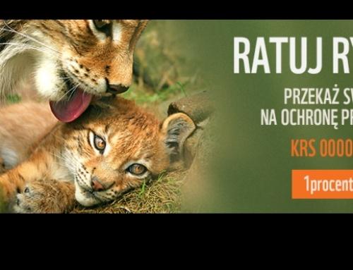 Przekaż polskim rysiom 1% podatku!