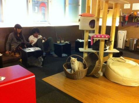 Shinjuku Neko Cafe 05