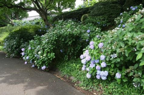 Tokyo Royal Gardens 15