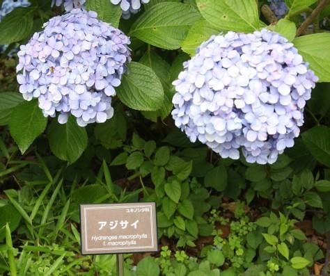Tokyo Royal Gardens 16