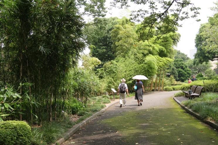 Tokyo Royal Gardens Bamboo forest Japan