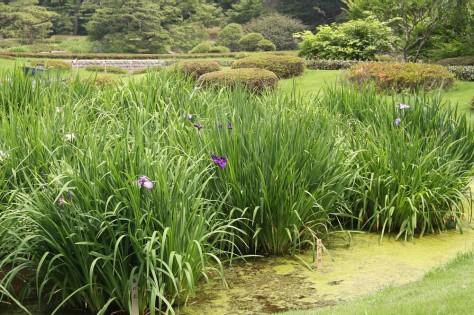 Tokyo Royal Gardens 35