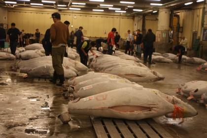 Dokumenty iseriale ojapońskim jedzeniu naNetflix / Targ rybny Tsukiji wTokio (Aukcja tuńczyków), Tsukiji Tokyo