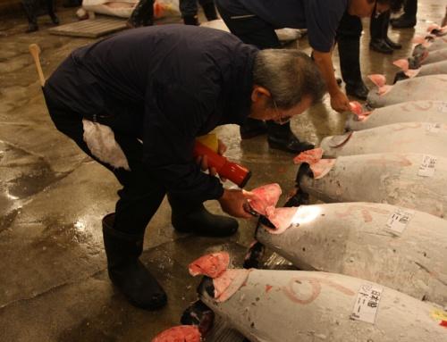 Tuńczyk za2 miliony dolarów – gdzie go zjeść? Recenzja restauracji Sushi Zanmai Tsukiji