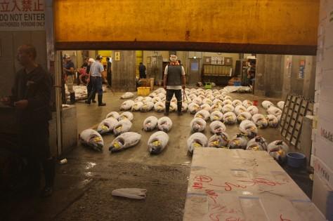 Tsukiji IMG_7278 2 A