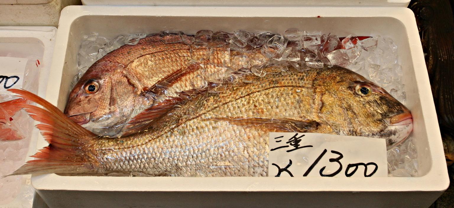 Galeria: Tsukiji (byKondi)