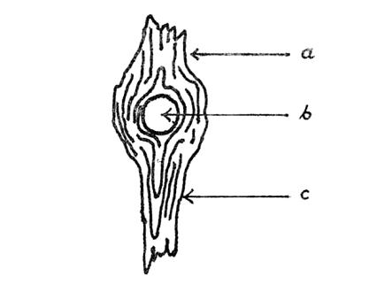 Przedmioty niezbędne wpodróży: Klasyczny imagineskop Jabcona