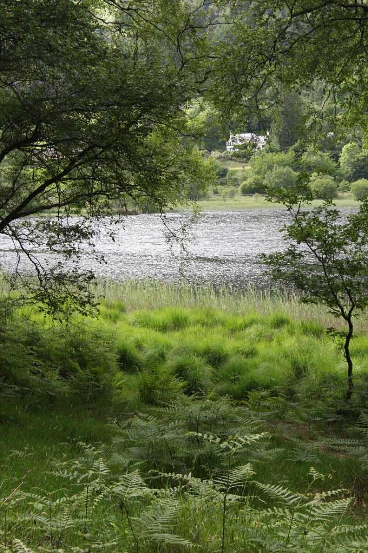 Jezioro Dolne - Lower Lake, Glendalough