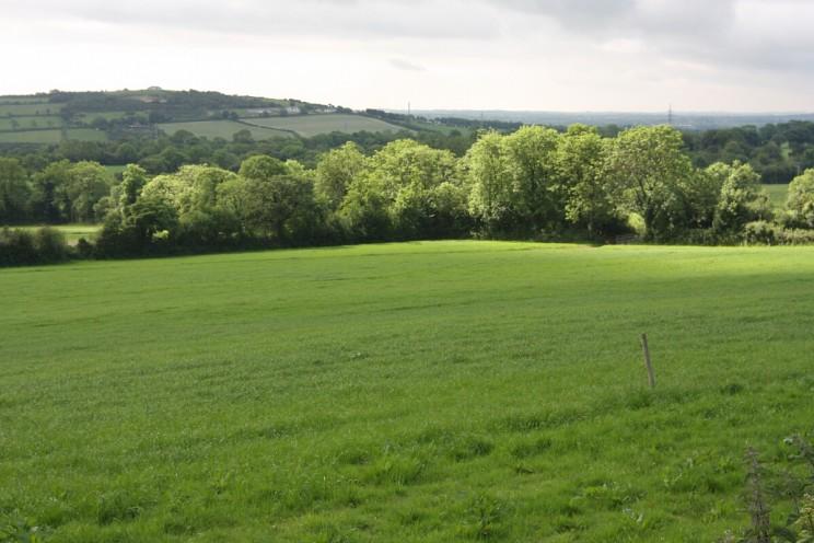 Okolice Gorey, hrabstwo Wexford, Irlandia (czerwiec 2014)