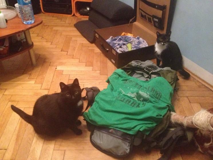 Pakowanie wpodróż doBrazylii - kotki pomagają
