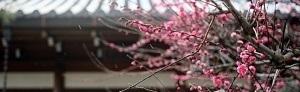 Japońskie przysłowia #15: wataru seken ni oni wa nashi