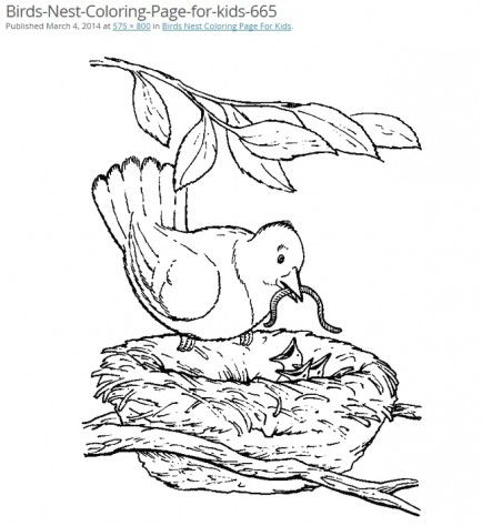 Three birds in nest coloring page