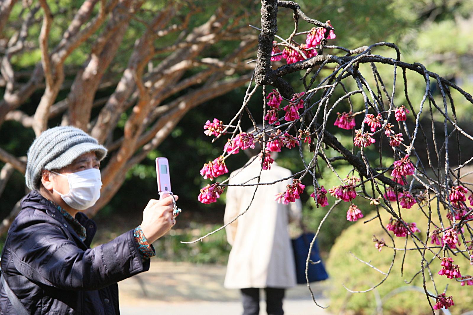 Największe sekrety Japończyków: Dlaczego Japończycy noszą maski?