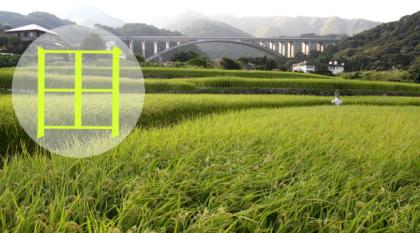 Kanji tygodnia: pole ryżowe (田)