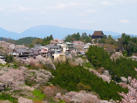 Cherry blossoms at the Yoshinoyama 01