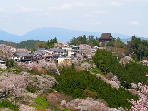Cherry blossoms at the Yoshinoyama 01