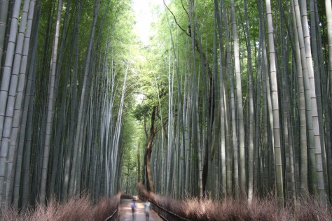 The Bamboo Forest of Arashiyama - Bamboo Grove
