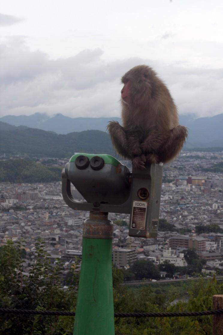 Monkey Park Iwatayama wArashiyama, Kioto, Japonia