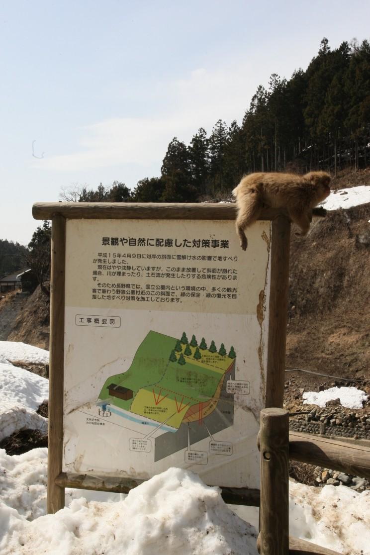Snow Monkey Park, Jigokudani Yaen-koen, Yudanaka, prefektura Nagano, Japonia