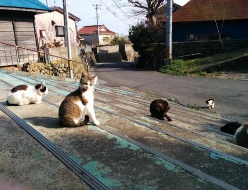 Ciekawe miejsca wJaponii: kocia wyspa Tashirojima