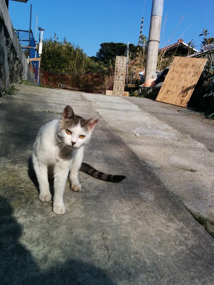 Kocia wyspa Tashirojima (田代島), Sendai, Cat Island