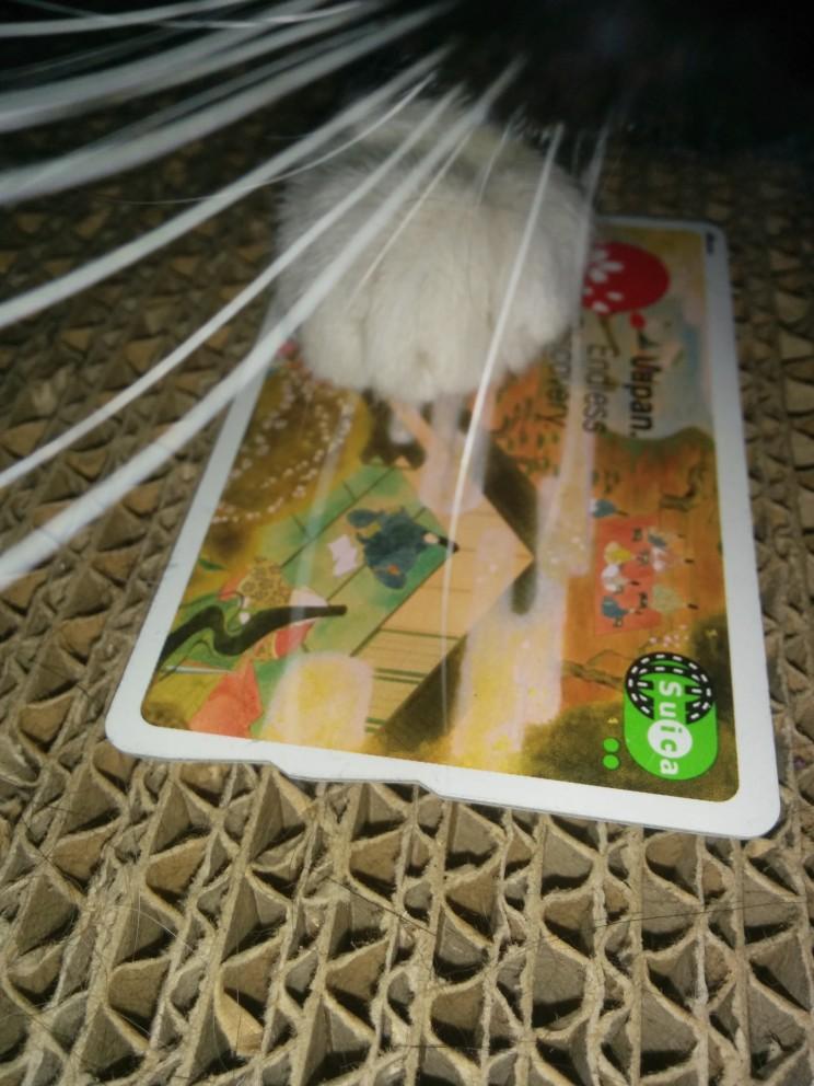 co spakować doJaponii: karta Suica - warto porzyczyć, zamiast kupować