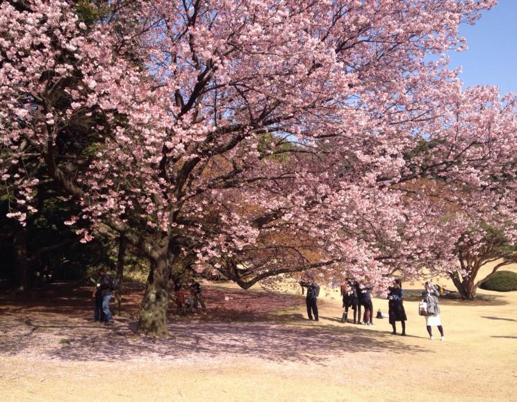 Park Shinjuku Gyoen wTokio, prefektura stołeczna Tokio, Japonia