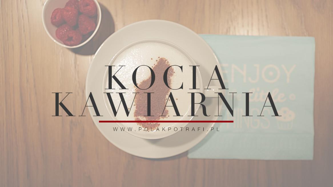 Kocia Kawiarnia Kociarnia – pomóż stworzyć pierwszą Neko Cafe wPolsce