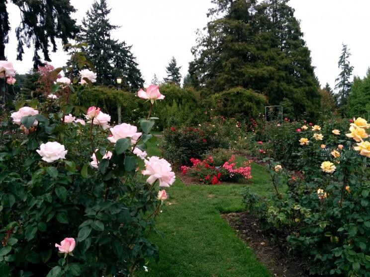International Rose Test Garden, Portland