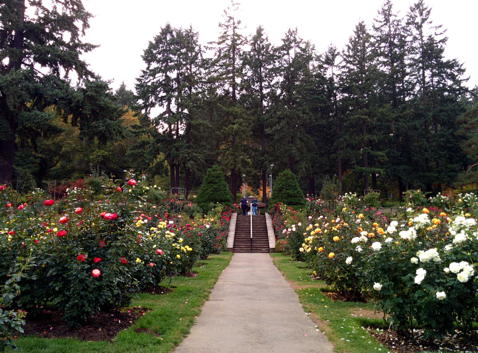 Portland International Rose Test Garden Washington Park By Em Tu Tony Halik