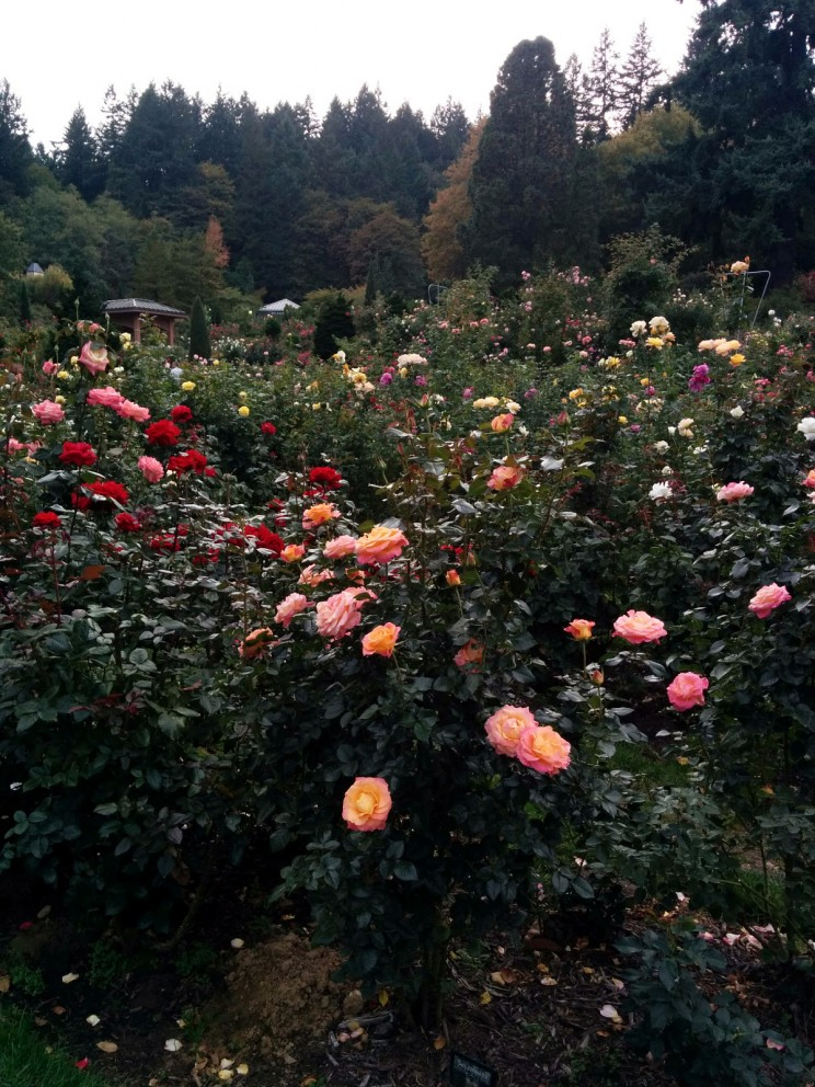 Portland: International Rose Test Garden