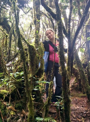 mossy_forest_cameron_highlands