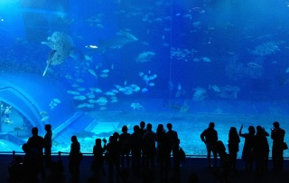 Churaumi Aquarium, Okinawa, Japonia