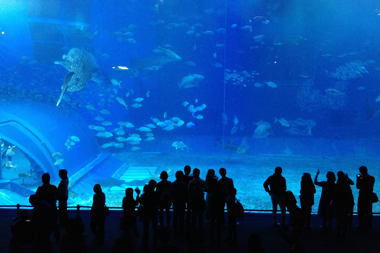 Churaumi Aquarium, Okinawa, Japonia