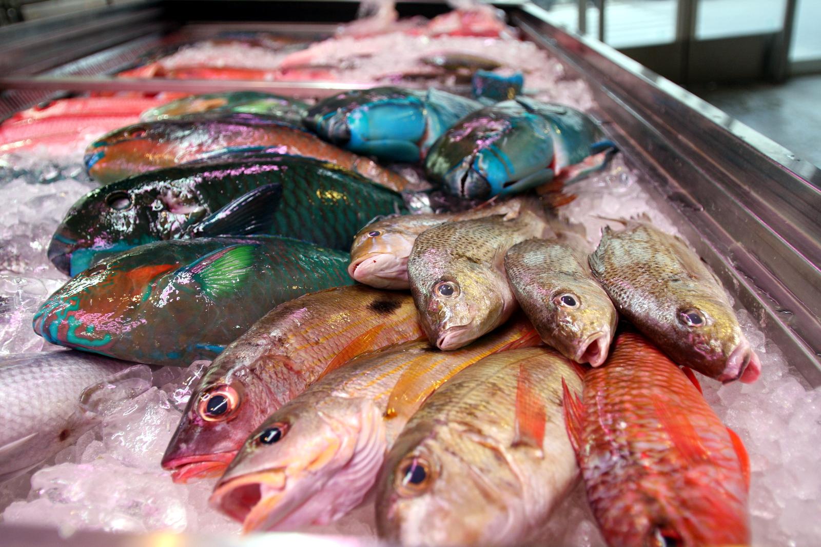 Okinawa: Tomari Lyumachi Fish Market isurowy nigdy nie mrożony tuńczyk