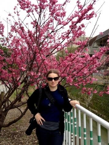 sakura_blooming_2016_okinawa_IMG_1115
