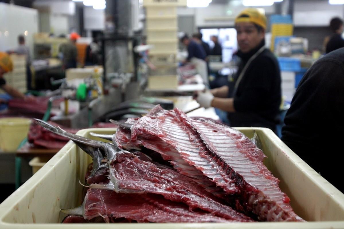 Tuńczyki zOkinawy - Tomari Lyumachi Fish Market