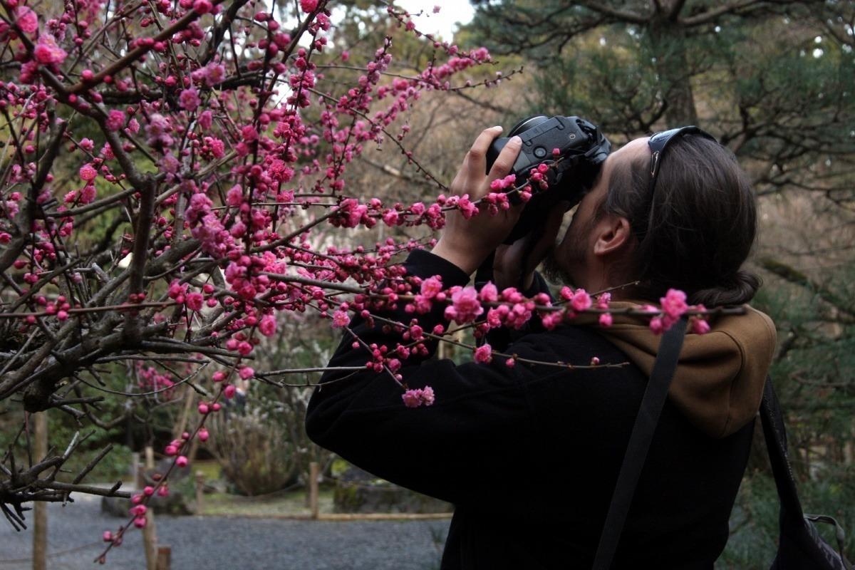 """Śliwy (ume) wRyōan-ji, czyli """"Kamiennej świątyni wKioto (marzec 2015)"""