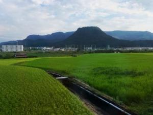 Kanji tygodnia: ryż (米) - Pola ryżowe (wtle góra Mannen), Yufuin, Japonia