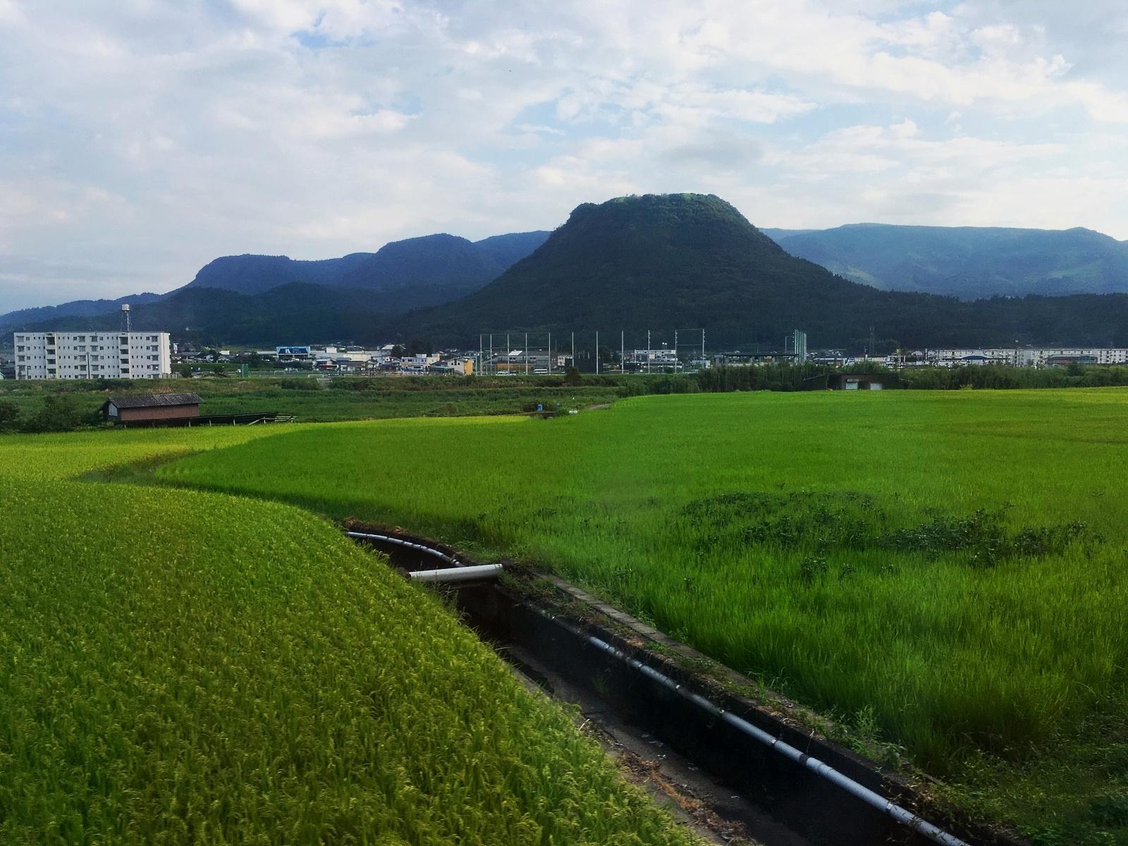 Kanji tygodnia: ryż (米)
