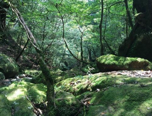 Ciekawe miejsca wJaponii: Yakushima iShiratani Unsuikyo
