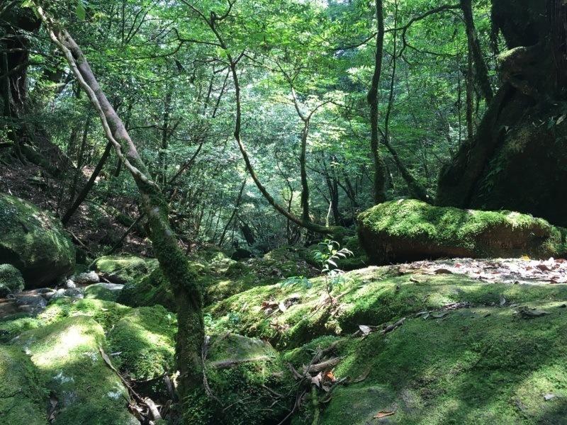Mech naszlaku Shiratani Unsuikyo, Yakushima